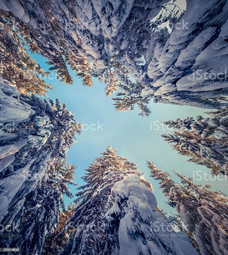 Upward view of the sky in a snowy forest stock photo