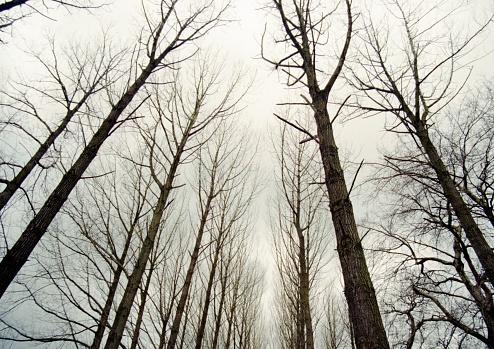 겨울에 나무의 위쪽 보기 0명에 대한 스톡 사진 및 기타 이미지