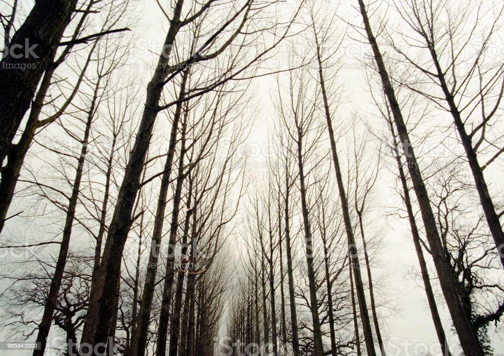 겨울에 나무의 위쪽 보기 - 로열티 프리 0명 스톡 사진