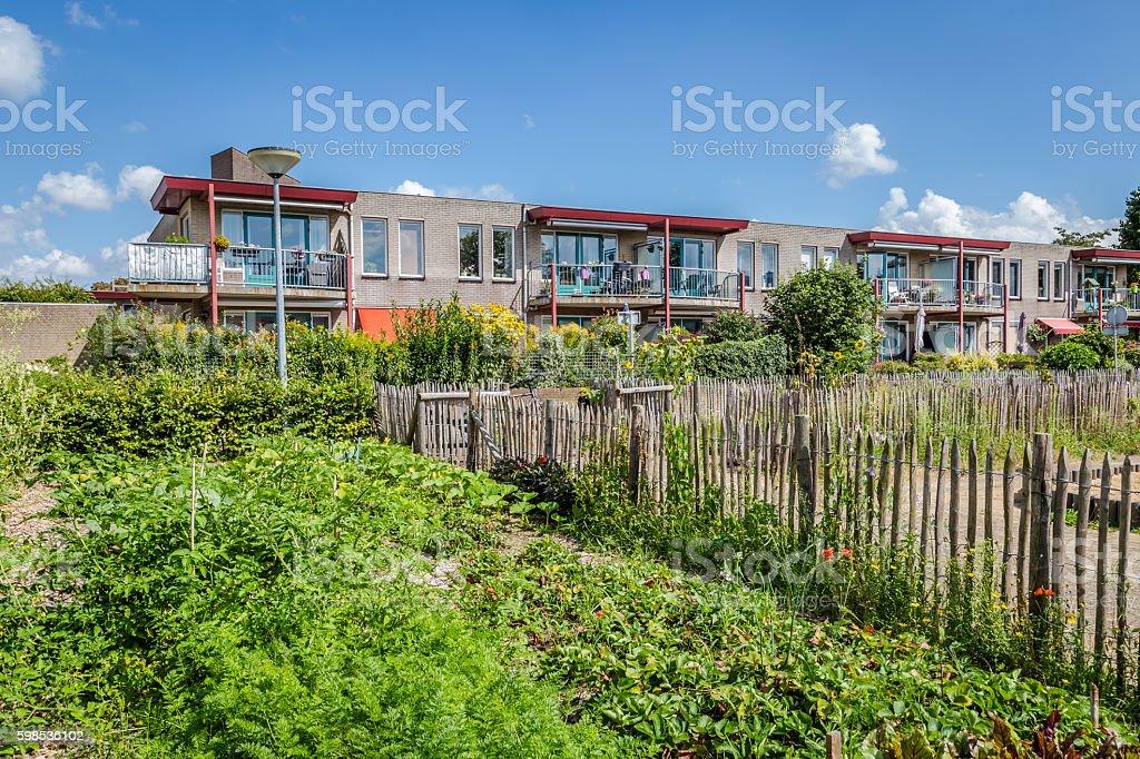Urban agriculture: a vegetable garden beside an apartment buildi photo libre de droits