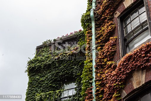 Urban brick brownstone covered in ivy, oxidized gutter, horizontal aspect