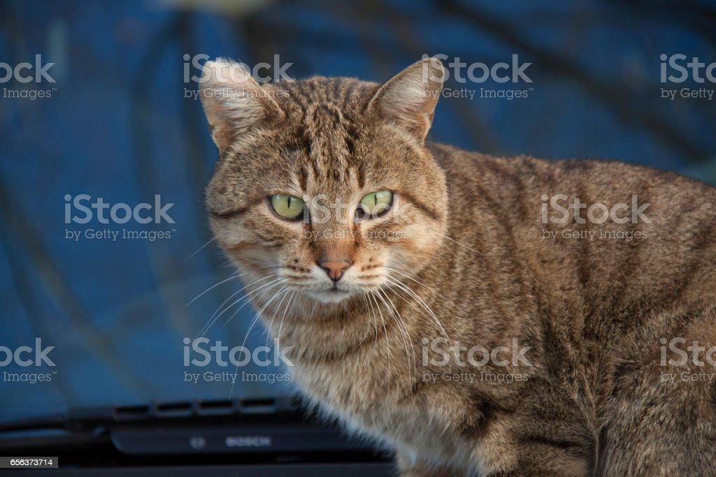 Urban Cat стоковое фото