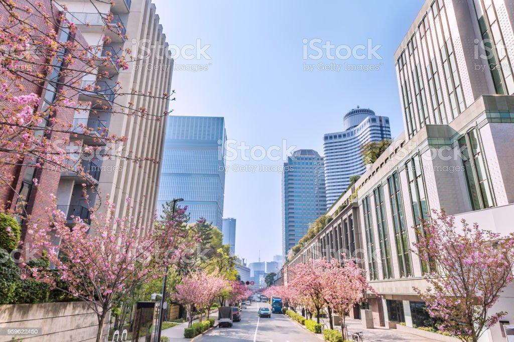 Árbol de cerezo urbano - Foto de stock de Abril libre de derechos