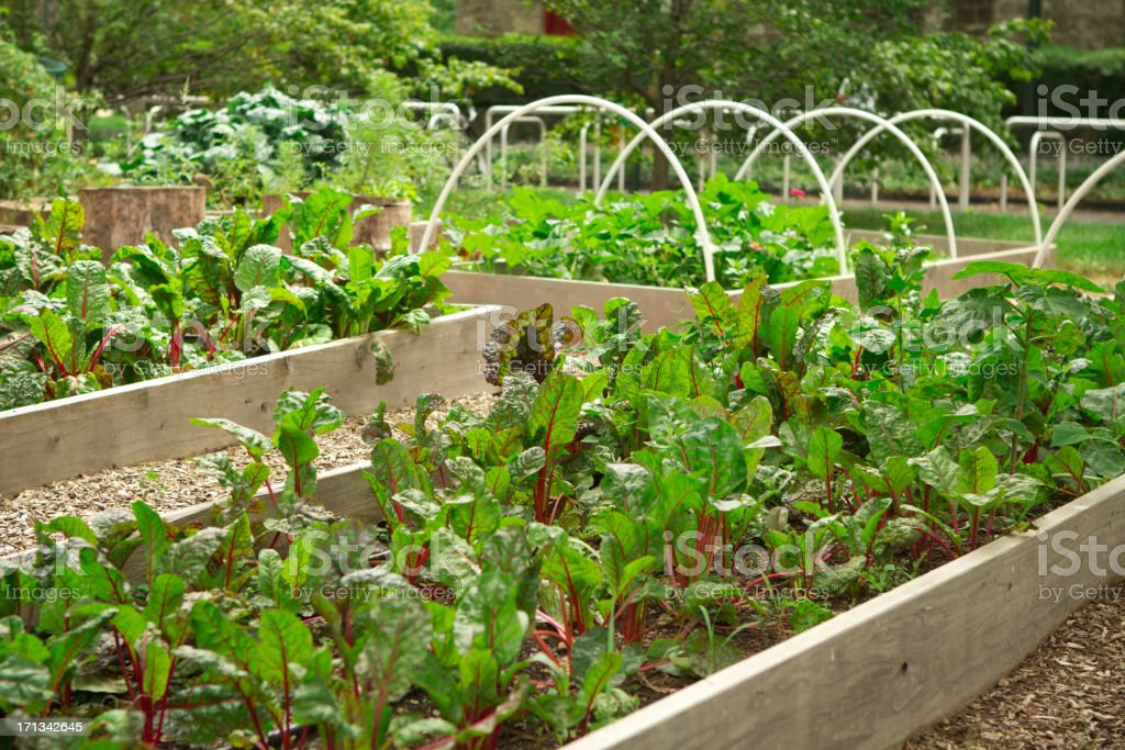 Urban community garden stock photo