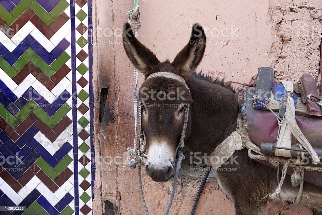 Urban donkey in a small street royalty-free stock photo
