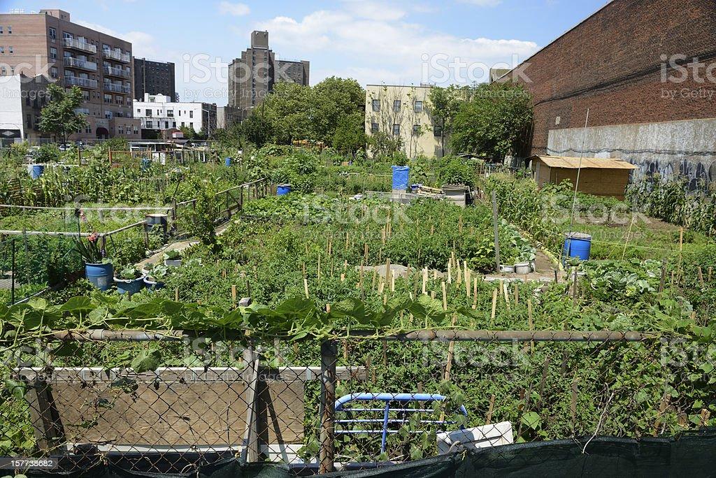 Urban farm plot in Coney Island, New York stock photo
