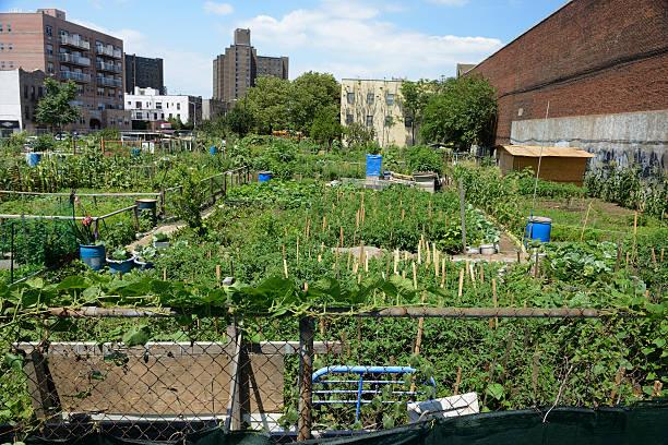 urban farm plot auf coney island, new york - urbaner garten stock-fotos und bilder