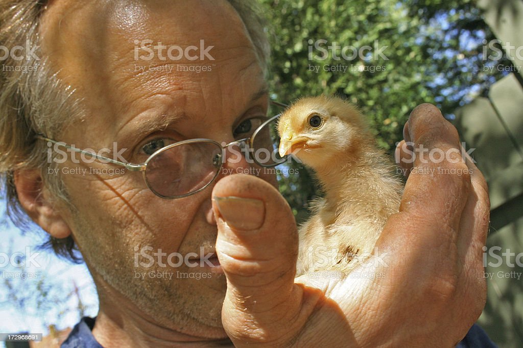 Urban Farmer holds Chick in the Hand royalty-free stock photo