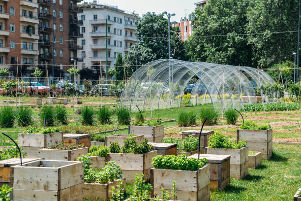 Urban farming sustainability concept, captured in Milan, Lombardy, Italy. stock photo