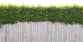 Looking at a backyard fence with a lush green hedge growing over the top. This image tiles seamlessly horizontally and is isolated at the top, making it easy to integrate with a white based design.
