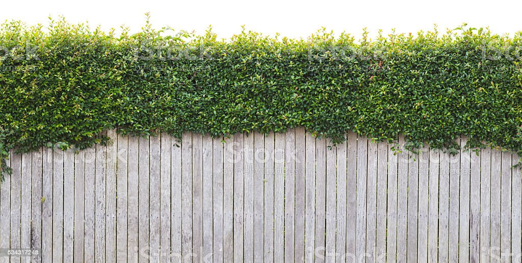 Urban Fence With Hedge - Seamless & Isolated stock photo
