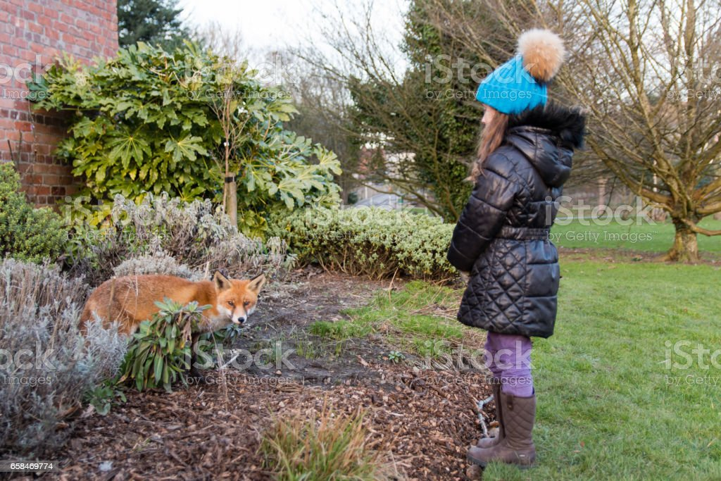 Urban fox with young child in park, during the day stock photo