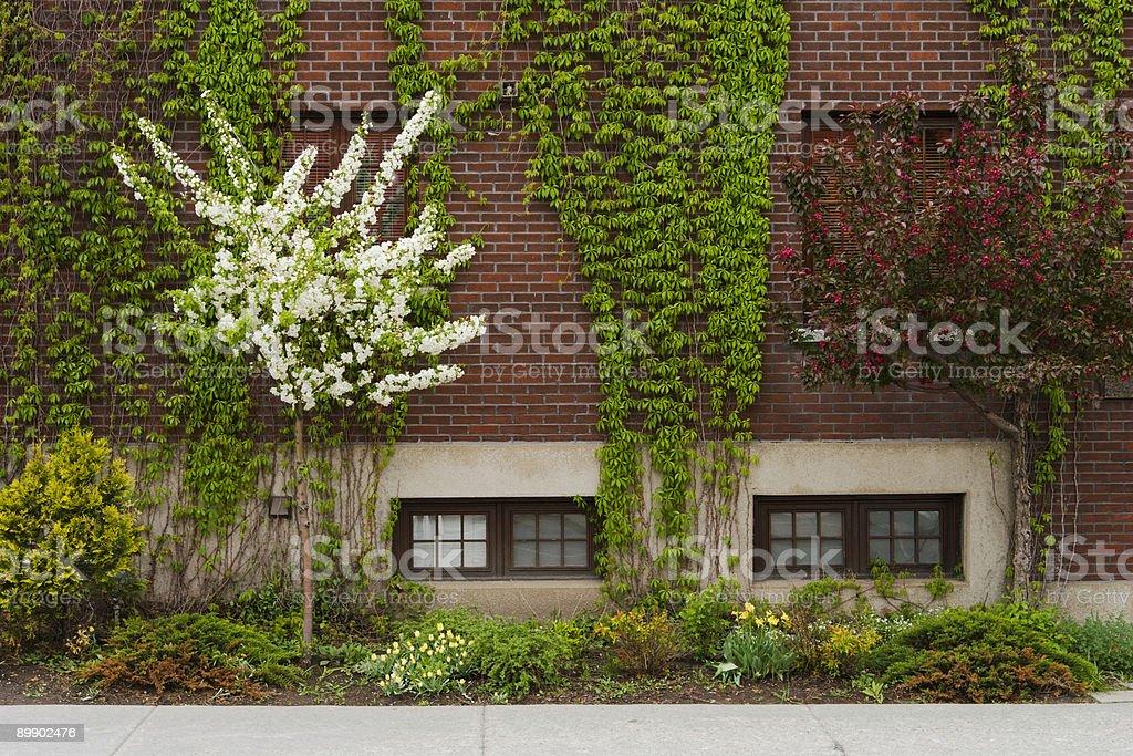 Urban Garden royalty-free stock photo