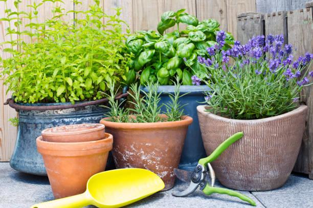 urban gardening, verse kruiden in potten van klei - bloempot stockfoto's en -beelden
