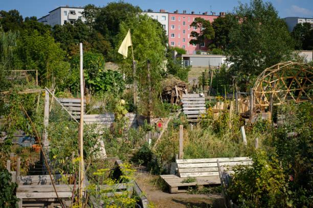 urban gardening - garten am tempelhofer feld (flughafen tempelhof) in berlin - berlin tempelhof stock-fotos und bilder