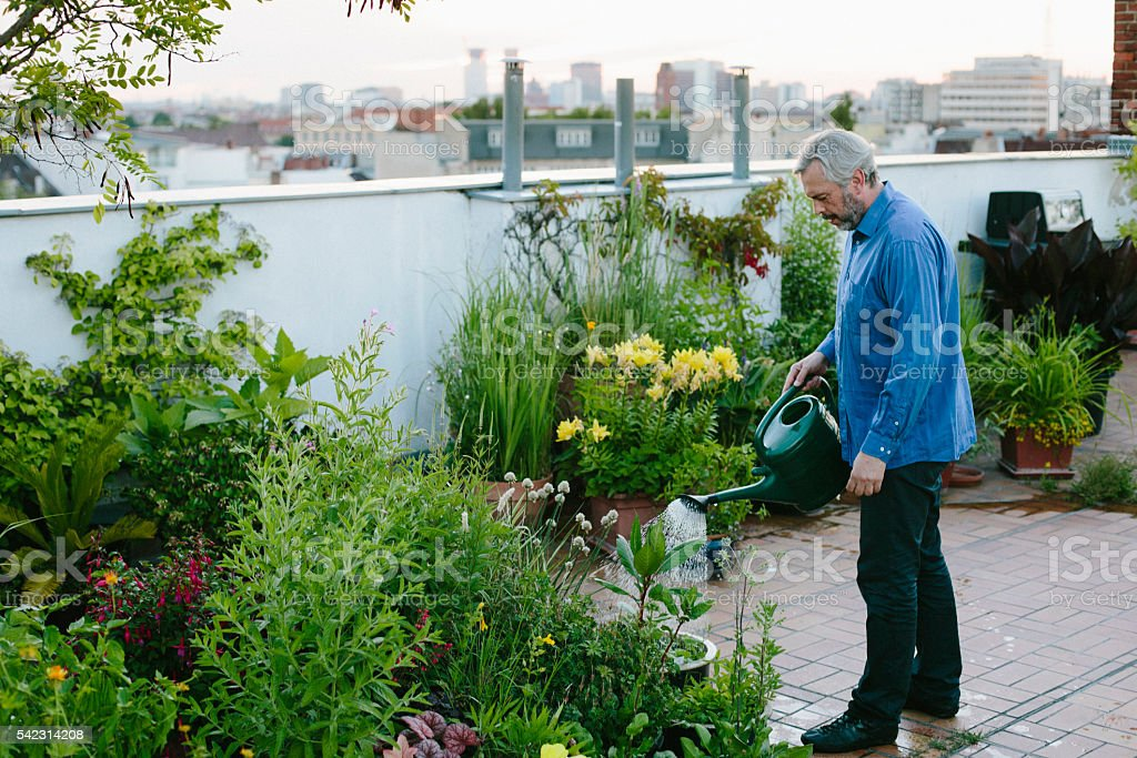 urban gardening: man pours his plants on roof garden stock photo