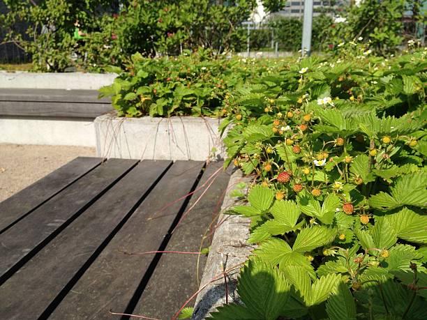 Urban Garten – Foto