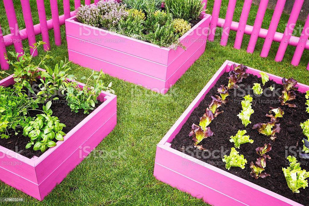 Urban herb garden stock photo
