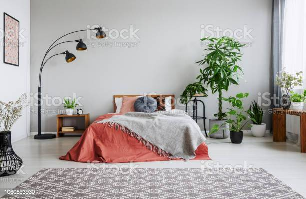 Urban jungle in bedroom with double bed lamp and carpet real photo picture id1060893930?b=1&k=6&m=1060893930&s=612x612&h=hvio0n93ce wf982opo57byotxfybzf2sjgjejslbnc=