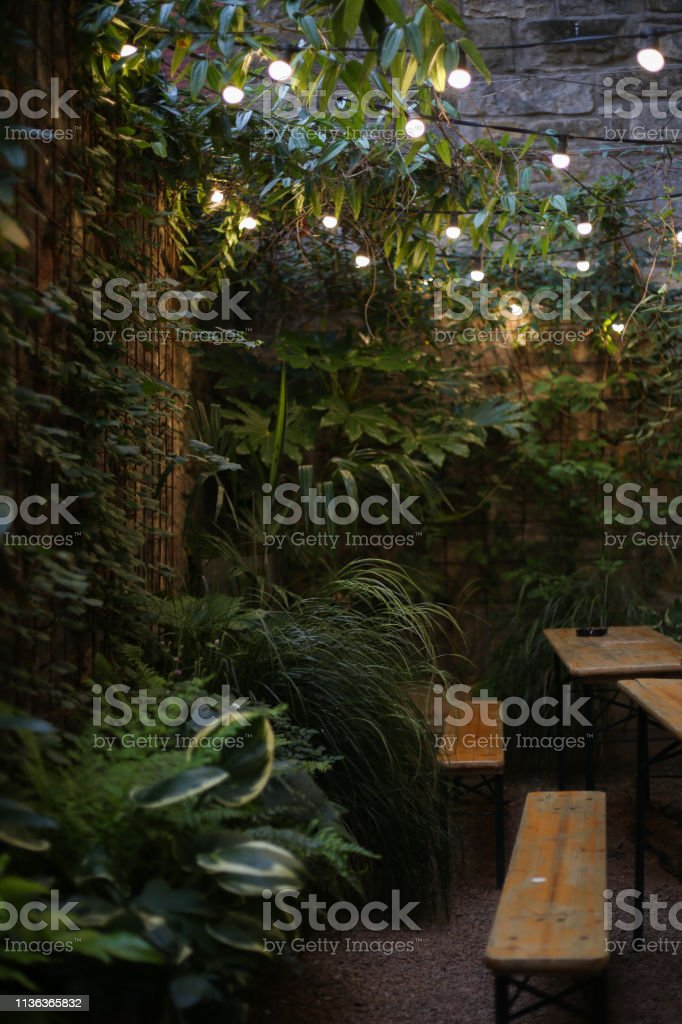 Urban Jungle Patio Garden With Hanging Lights Stock Photo Download Image Now Istock