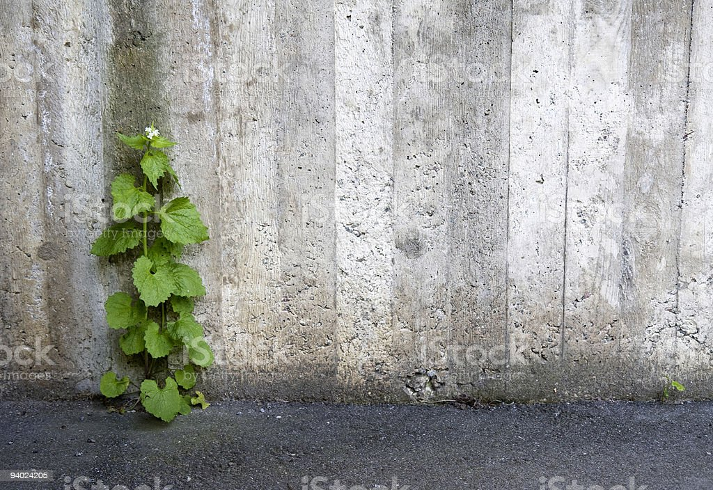 Urban Natur – Foto