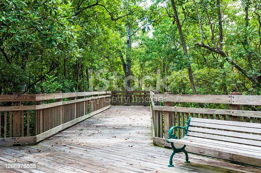 Urban Park in Celebration Florida with a treelined Boardwalk meandering through the woods and Park Benches so you can stop and rest for awhile