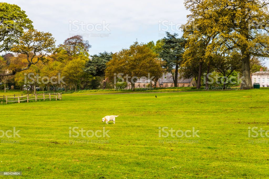 Urban park with exotic trees, wonderful resting place, wooden benches, shrubs and grass royalty-free stock photo