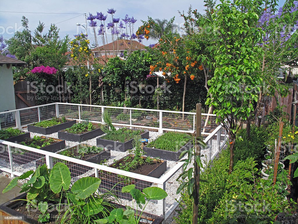 Urban Raised-Bed Vegetable Garden stock photo