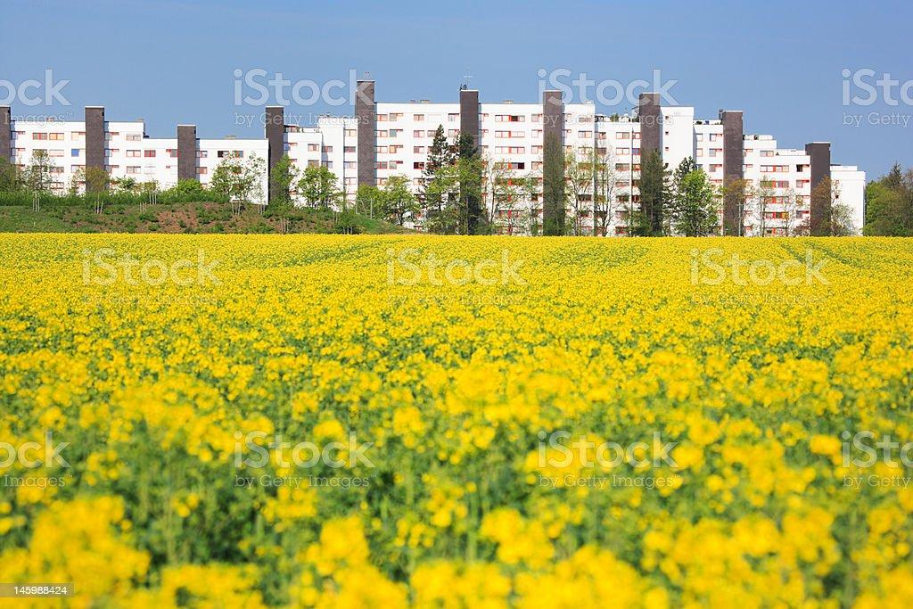 urban spring royalty-free stock photo
