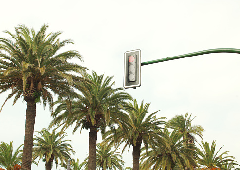 Urban traffic light against sky and palm trees near road