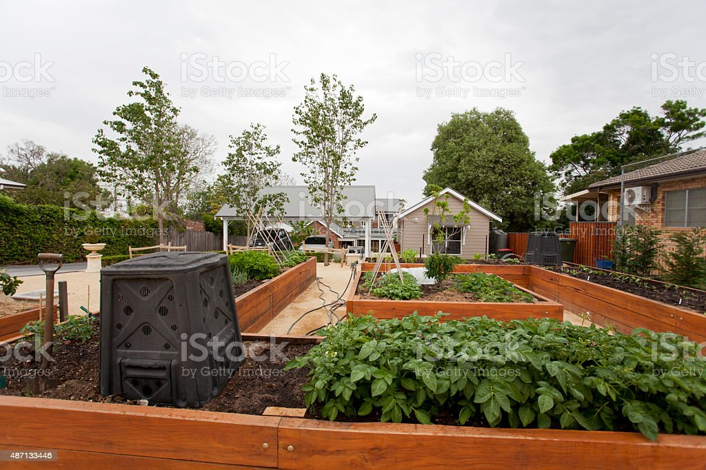 Urban vegetable garden stock photo