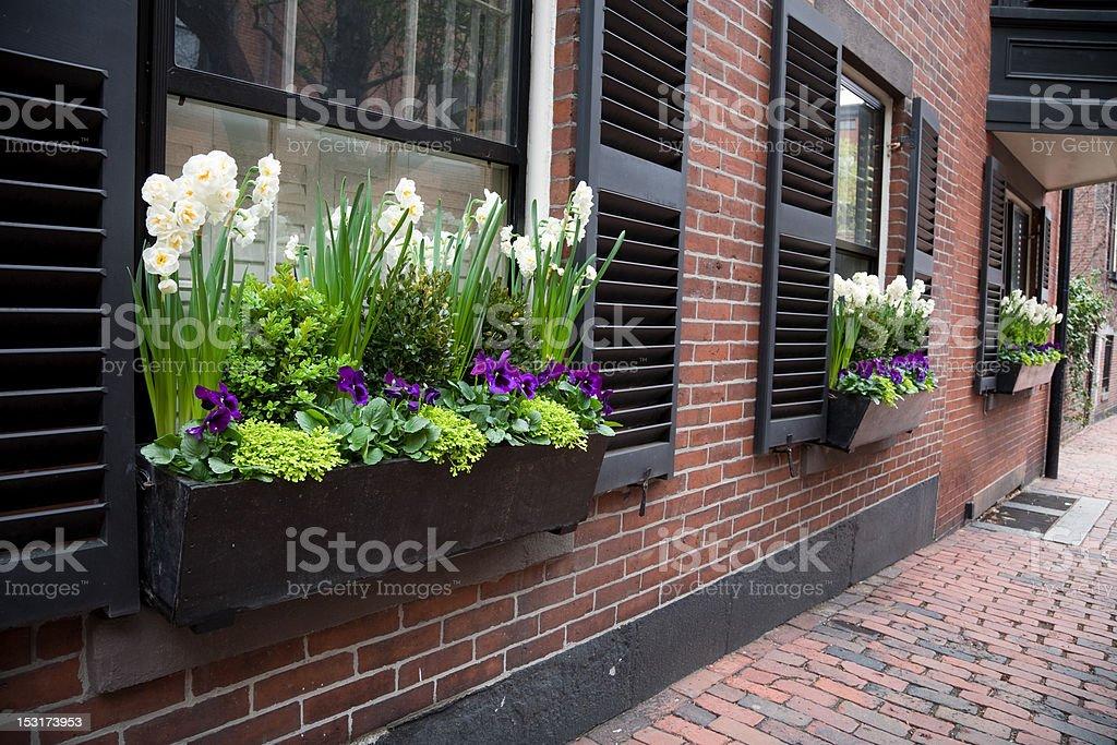 Urban Window Box stock photo