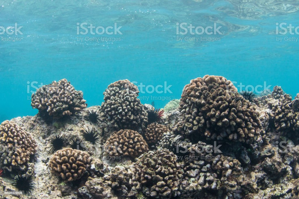 urchins and coral stock photo