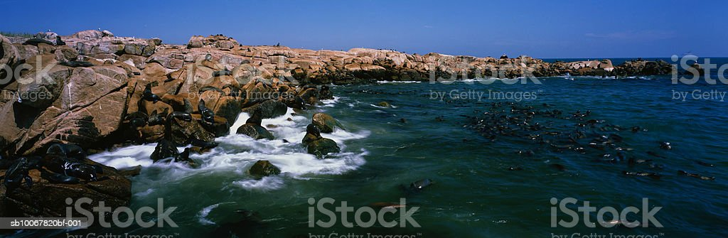 Uruguay, Maldonado, Punta del Este, Isla de Lobos, seals royalty-free stock photo