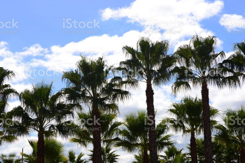 Urwald -Im Palmengarten - Palmenblätter - Spanien royalty-free stock photo