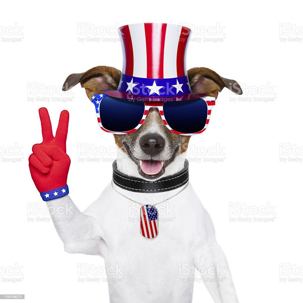 usa american dog royalty-free stock photo