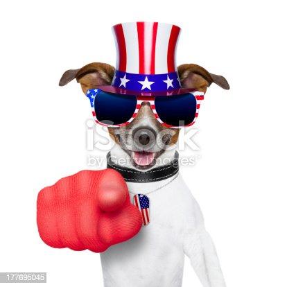 istock usa american dog 177695045