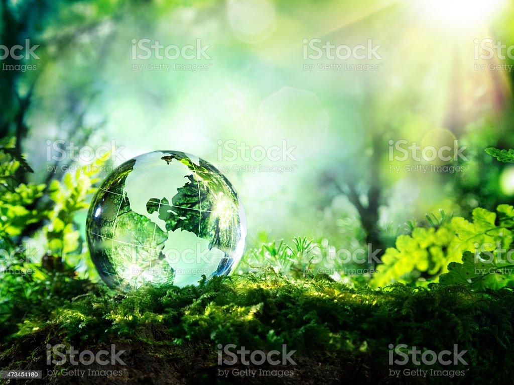 Usa Welt ruhen in einem Wald-Umwelt-Konzept Lizenzfreies stock-foto