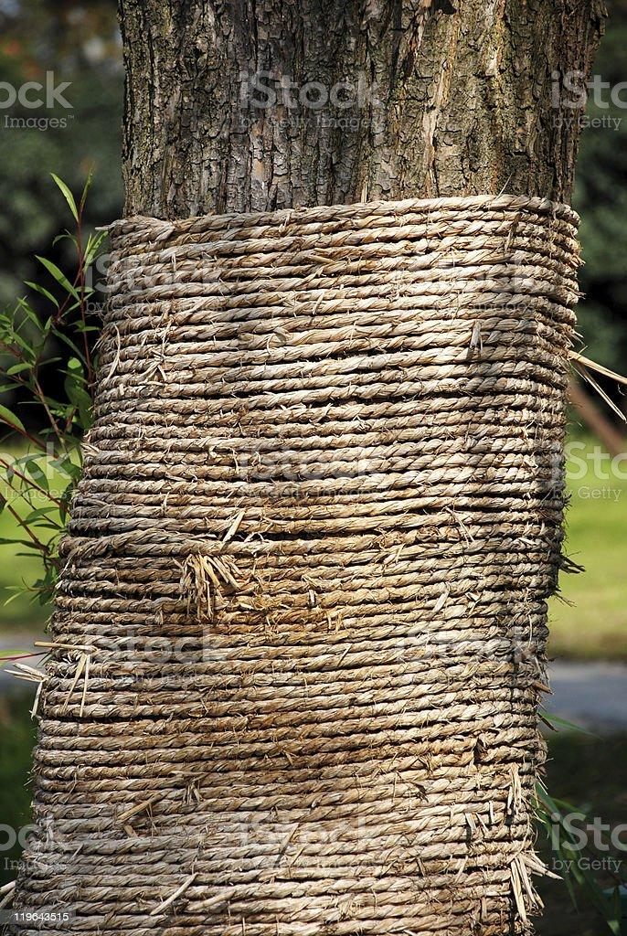 use har-band protect the tree stock photo