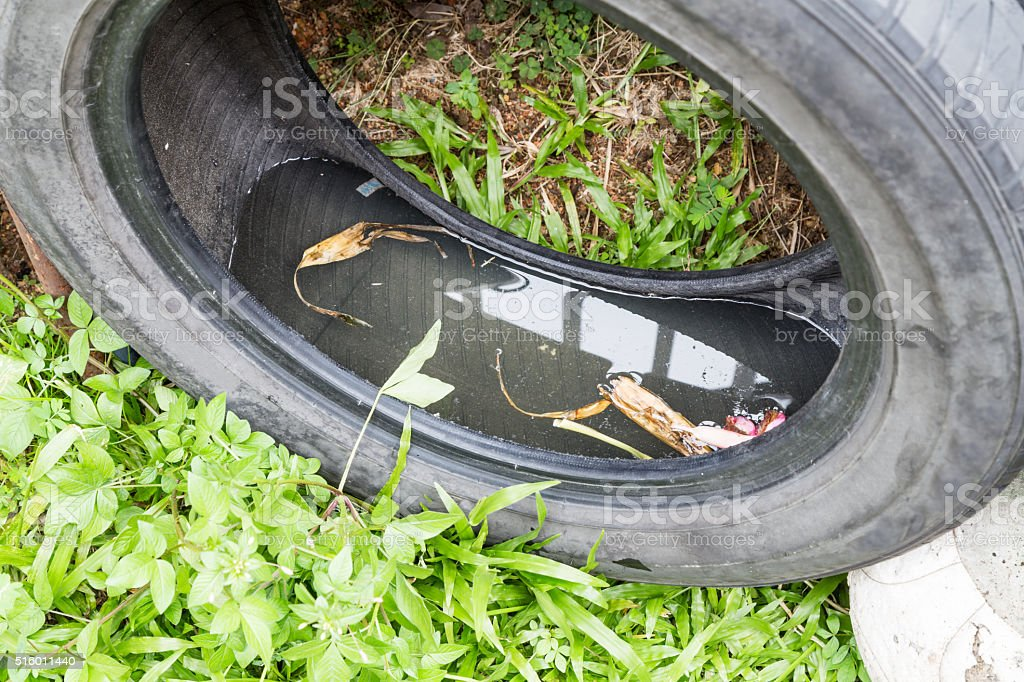 Used tyres potentially store stagnant water and mosquitoes breed stock photo