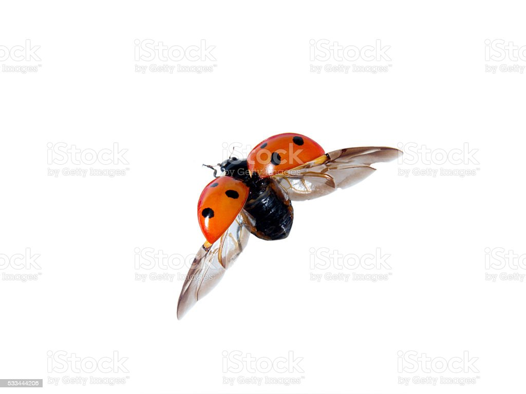 useful insect stock photo