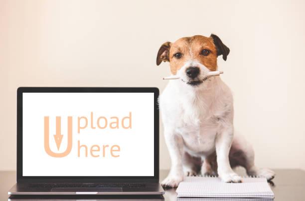 User-generated content (UGC) concept met hond creatief werk doen op notebook foto