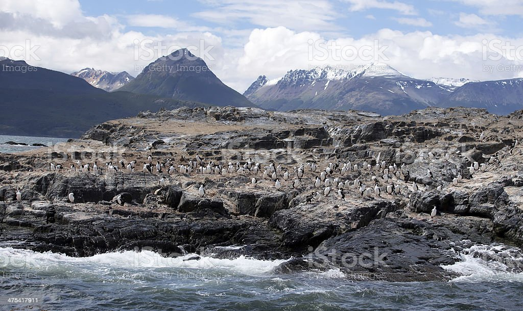 Ushuaia Landscape - Cormorants on Large Rock Formation royalty-free stock photo