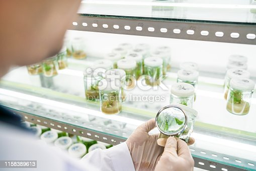 Using magnifying glass to observe plant samples in a laboratory.