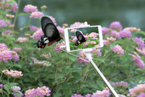 Mit Smartphone zum Fotografieren auf Schmetterling im Garten. – Foto