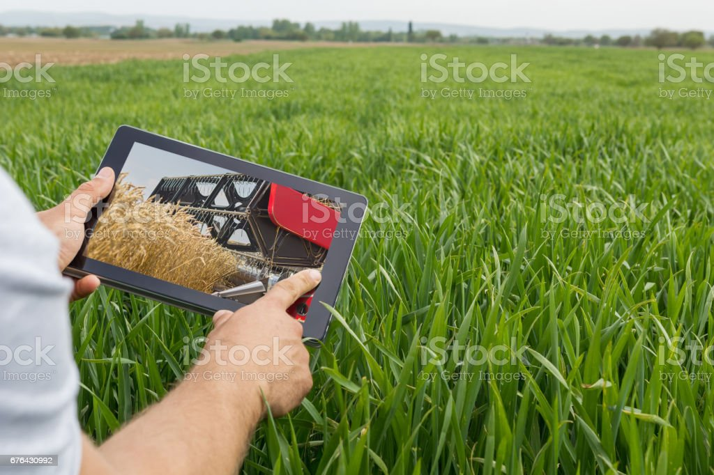 Using tablet on wheat field. Modern Agriculture. Wheat futures concept. - foto de acervo