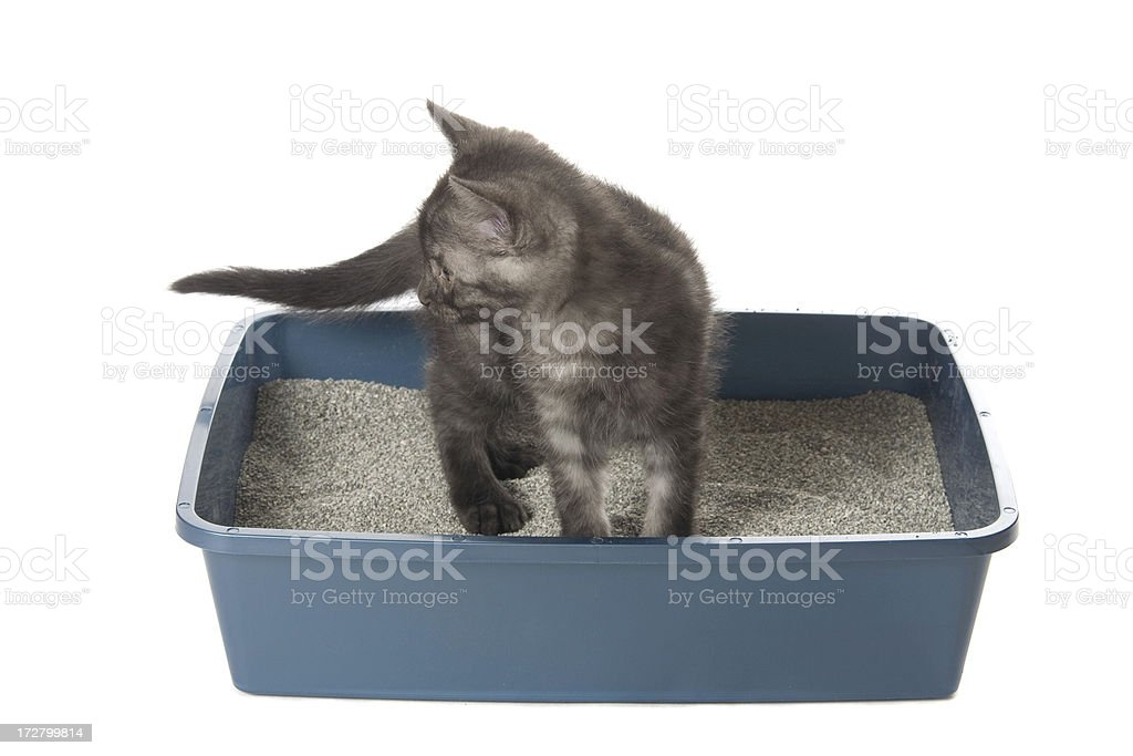 Using the Litterbox royalty-free stock photo