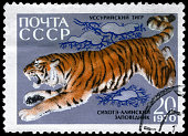 """A Stamp printed in USSR shows image of a Ussurian Tiger from the series """"Animals from the Sikhote-Alin Reserve"""", circa 1970"""