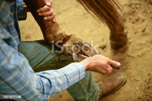 A Utah farrier cares for a horse by using a hoof pick tool to remove dirt from the animal's hooves at a Ranch in Western USA