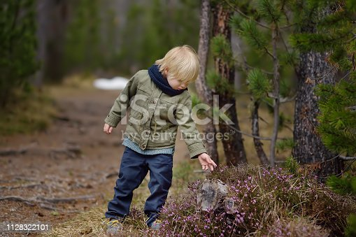 ute little boy examines a Heather Bush in the Swiss National Park in the spring. Active family time outdoors. Hiking with young children. Study of nature. Young naturalist.
